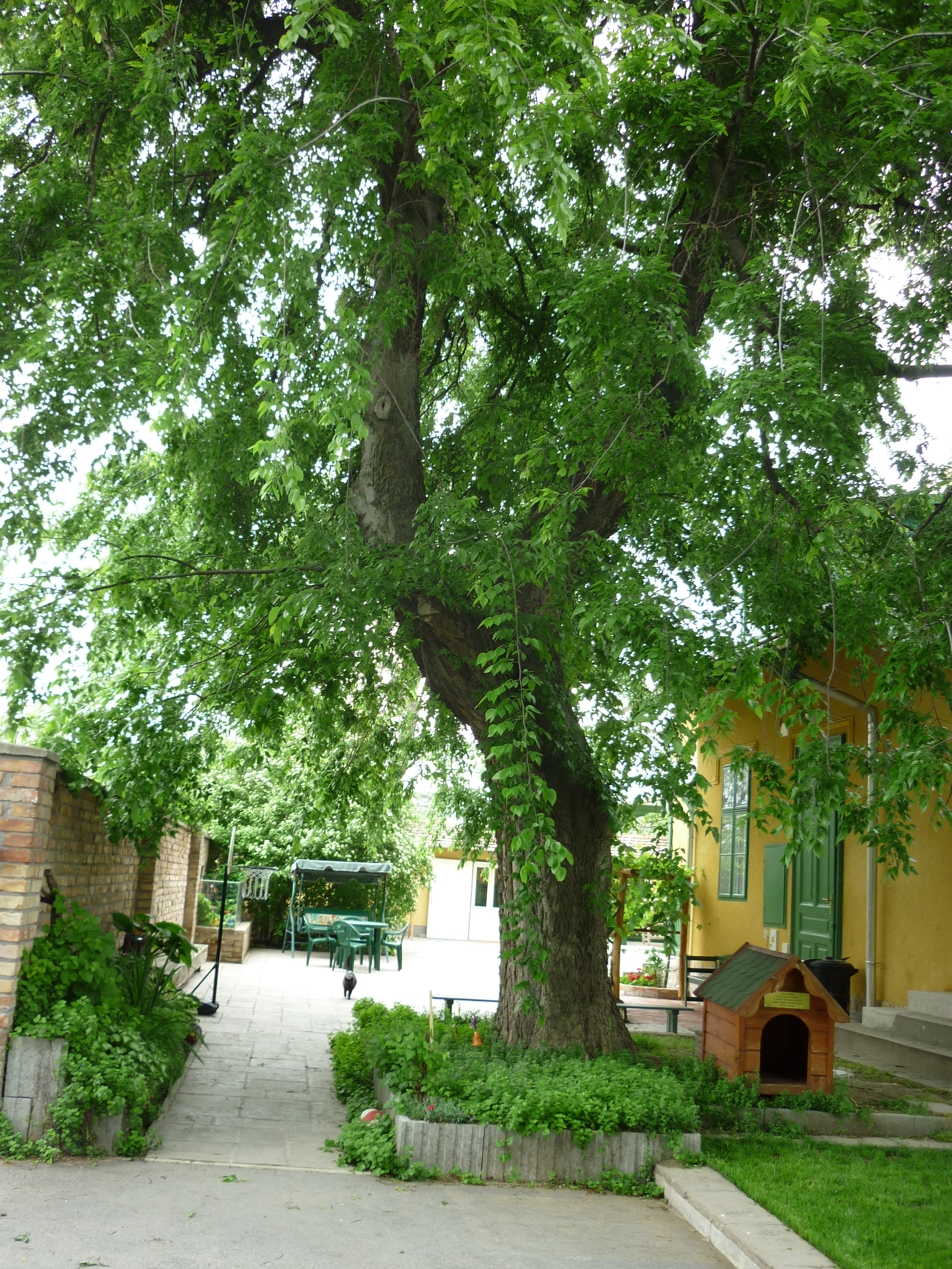 Ostrom a fa alatt – az ostorfa, amiről Frakk megpróbálta lehozni Szerénkét és Lukréciát