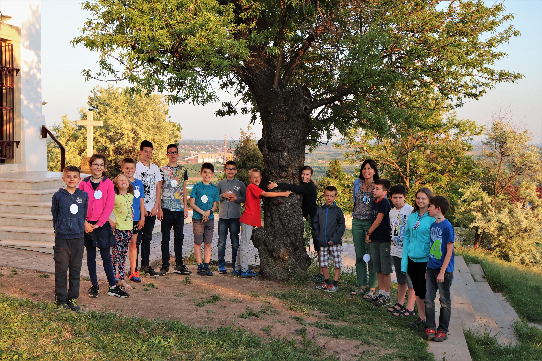 Mit mesélnek rólunk a fák? – interjú Tokodi Nórával, az Év Fája verseny koordinátorával